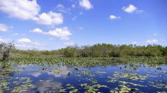 Everglades National Park (renedrivers) Tags: everglades evergladesnationalpark florida renedrivers rchan415