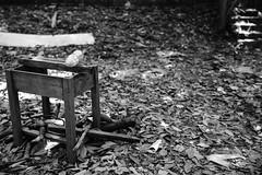 Abandoned Desk (superzookeeper) Tags: canoneos5dmarkiv ef2470mmf28liiusm 5dmk4 5dmkiv hk hongkong yuenlong eos digital street bokeh desk abandoned ruins abandoneddesk abandonedschool school brokendesk blackandwhite bnw monochrome