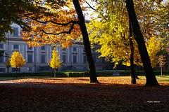 Autunno Reale (stefano.chiarato) Tags: autunno autumn parco parcodimonza villareale monza lago lombardia italy pentaxart pentax pentaxlife pentaxk70