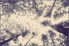DSC_1515 (FMAG) Tags: kpn roztokawiersze