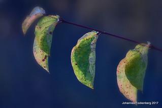 Herbstfarben mal anders