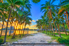 Palm Beach Island Coconut Trees Sunset Waterway (Captain Kimo) Tags: coconuttree flaglermuseum palmbeachcounty palmbeachisland thepalmbeaches westpalmbeach palmbeach