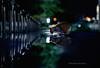 MD5_0244 (Masakazu Ikeguchi) Tags: cat nikond5 straycat 池口正和 tokyo japan