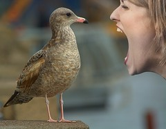 Squawking (swong95765) Tags: gull bird woman animal female lady yell yelling squawk bokeh