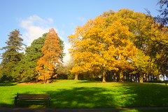Shadows and Gold (Dave Roberts3) Tags: autumn fall bench wales gwent newport bellevue park