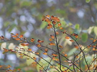 Little leafs