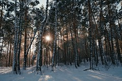 Тихий свет / Silent light (spoilt.exile) Tags: украина киев лесное лес зима снег солнце свет лучи деревья тени пейзаж ukraine keiv kyiv lisova forest winter snow sun light rays trees landscape frost