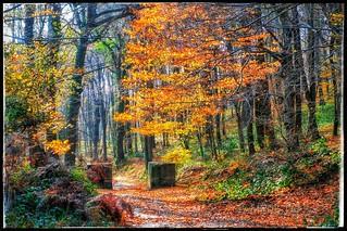 Forest Belgrat, Istanbul.