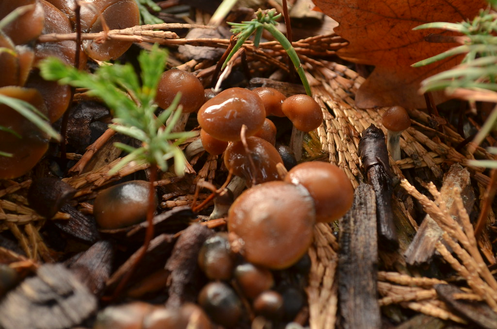 The World's Best Photos of magic and psilocybe - Flickr Hive
