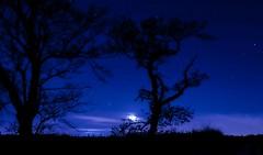 Moonlight (xDigital-Dreamsx) Tags: moon mood moonlight trees blue silhouette landscape nature naturephotography nightsky night dark fence grass