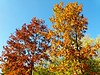 trees (archgionni) Tags: sky trees rami branches foglie leaves rosso red giallo yellow natura nature autunno autumn