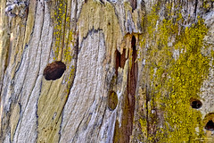 Features of nature - Feições da natureza (Yako36) Tags: portugal peniche ferrel tree árvore líquenes fungos lichens fungi helios442 fujifilmxt10