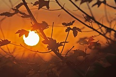 Sunset (Xtraphoto) Tags: sonnenlicht light autumn herbst leaves sonnenuntergang sunset sonne sun sunlight