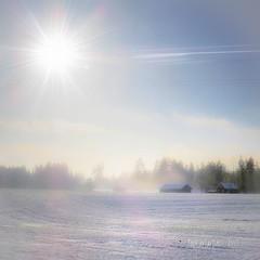 ~ one foggy day ~   Gunnilbo, Skinnskatteberg, Sweden (Tankartartid) Tags: blåhimmel himmel sky bluesky hus buildings bondgård farm ljusblått lightblue landsbygd countryside landskap landscape dimmigt dimma fog foggy sol sun vinter winter natur nature nordic norden europe sverige sweden instagram ifttt