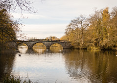 Bridge over the lake 20171119-2649 (davets26) Tags: canon clumberpark eos7dmkii nationaltrust