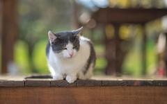 kittens (51) (Vlado Ferenčić) Tags: animalplanet animals catsdogs cats zagorje vladoferencic kitty kittens vladimirferencic hrvatska croatia hrvatskozagorje klenovnik nikond600 nikkor8518