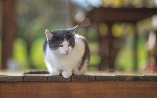 kittens (51)