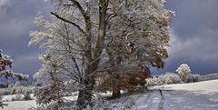 Winterweg neben Bäumen (Helmut Reichelt) Tags: winterweg bäume winterzauber felder schnee winter wolken herbst november wald weis schwaigwall geretsried bayern bavaria deutschland germany leica leicam typ240 captureone10 colorefexpro4 leicasummilux50mmf14asph panorama