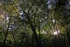 La lumière du soleil à travers les arbres (Sunlight through the Trees) (JB by the Sea) Tags: montreal montréal quebec québec canada october2017 parcdumontroyal mountroyalpark montroyal forest tree trees