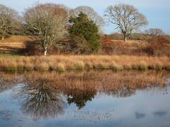 IMG_2010 (Dan Correia) Tags: marthasvineyard island pond relfection 15fav topv111 510fav topv333 topv555 1025fav