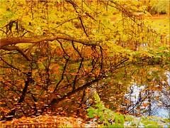 Autumn in the Eutin Castle Park (Ostseetroll) Tags: deu deutschland eutin geo:lat=5413554380 geo:lon=1062064460 geotagged schleswigholstein schlosspark herbst herbstfarben autumn autumncolours spiegelungen reflections