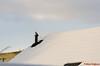 DSC_5432-5 (Piet Bink (aka)) Tags: roof dak sneeuw duif bird rest uitrusten lucht