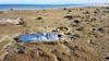PesceSecco (albi_tai) Tags: pesce pescesecco morte carcassa rimini mare romagna inverno minimal spiaggia forme albitai samsung s7 figofono