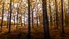 ABORNIKANO 1 (juan luis olaeta) Tags: canon canoneos60d sigma1020 paisajes landscape udazkena otoño autumn colores photoshop lightroom