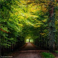 The Light From Above (Hans van Bockel) Tags: goedgekeurd nikon d7200 1680mm lightroom photoshop luminar nik rande diepenveen natuurgebied natuur laan herfst bomen kleur autumn