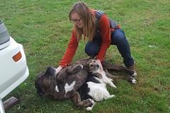 Hunde Buff und und Izzy streicheln, ist eine enorm wichtige Aufgabe im Ashram.