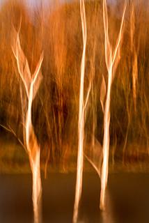 Dead Trees Swipe 3-0 F LR 11-2-17 J111