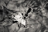 (RubyT (off to see kids & grandkids)) Tags: pentaxkp da50200wr leaf fall autumn water pentaxart pentax черноеибелое mono monocromo monochrome bw nb bn noirblanc blancoynegro schwarzweiss blackandwhite