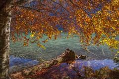 Autumn colors (milance1965) Tags: canon 5dmk2 canon24105l herbst colors farbe kärnten österreich sonne landschaft weissensee