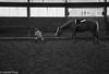 Battle of Wills (danfryer2) Tags: elizabeth barn monochrome mono lizzy trigger blackandwhite riding nikond7200