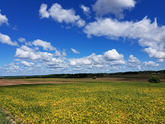 Co Rd 1, Rushville, New York (virt_) Tags: rushville newyork unitedstates 2016 ny finger lakes vacation trip travel family friends field sky clouds