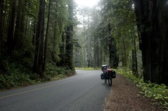 Are we on Endor, Yonder? (speed6ump) Tags: pan american highway 101 bicycle tour touring redwood state national park california