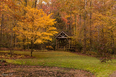 Listen to the forest tale  HBM (Irina1010) Tags: forest autumn colors foliage bench hbm shelter nature beautiful november canon outstandingromanianphotographers coth5
