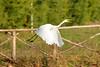 A-LUR_2011 (OrNeSsInA) Tags: trasimeno uccelli bird natura italia umbria castiglionedellago ornessina lucarosi nikon tamron byrd lago chiusi siena perugia aironi cormorani