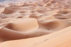 Sahara (davе) Tags: morocco sand sahara desert yellow landscape merzouga camel dusk dunes