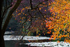 Almost touching (V Photography and Art) Tags: lake tree touching autumn colours vibrant hot cold orange bright branches reaching