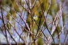 ...Solo solo o Sola sola (kiareimages1) Tags: uccellini uccelli oiseaux cinciallegra mésange nature autunno automne autumn images immagini colors colori couleurs