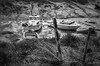 Marée basse Bretagne (minelflojor) Tags: maréebasse bateau cale poteau amarage eau herbe barque pêche cordage tidebass boat hold post mooring water grass bark fishing rope bretagne france