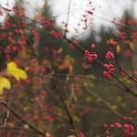 colors of November thumbnail