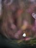Un poco de color. (luisotespi68) Tags: flor flores flower flowers fondo bokeh desenfoque olympus fotodiox pro chinon lens