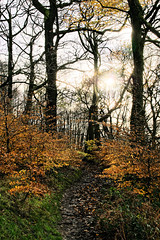Winter sunshine (Blue Pelican) Tags: november trees path woods sunshine sun glossop shirehill minoltadynax7d 18200