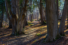 Out for a Walk (claudeallaert) Tags: sonya7ii fe70200mmf4 hiking highlights dr ottawa oldquarrytrail zoomlens sunrays shadows adobe lrclassic