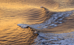 Waves Of Gold (AnyMotion) Tags: waves wellen sea meer sunset sonnenuntergang golden ferry fähre nature natur 2016 anymotion travel reisen pacificocean pazifik britishcolumbia canada kanada colours colors farben gold 7d2 canoneos7dmarkii ngc npc