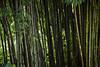 salavan (arcibald) Tags: salavan saravan laos laopdr
