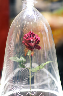 Rose under glass