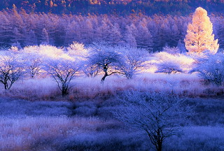 Morning of a hoarfrost 5
